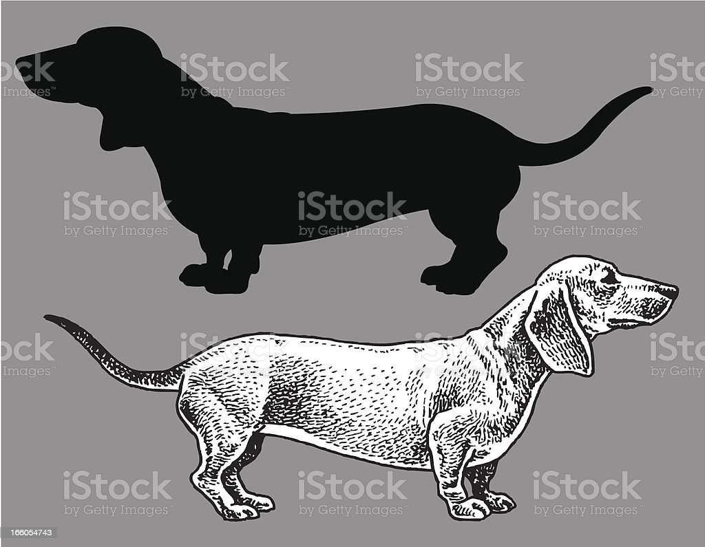 Dachshund - Dog, domestic pet vector art illustration