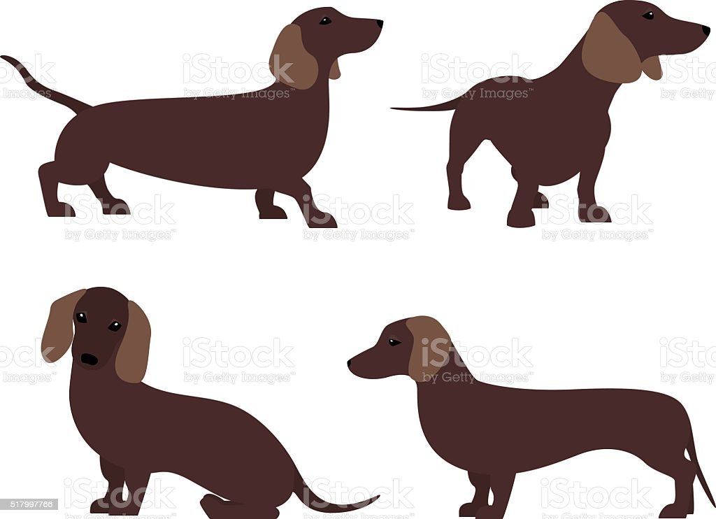 Dachshund in different poses. vector art illustration