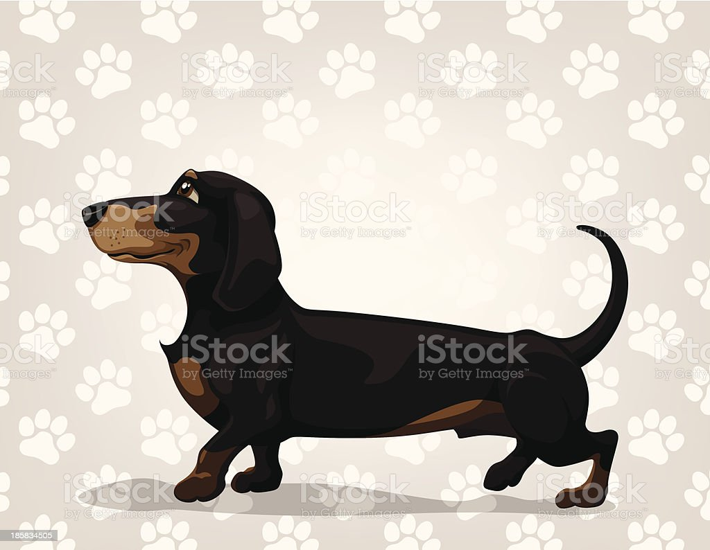 Dachshund royalty-free stock vector art