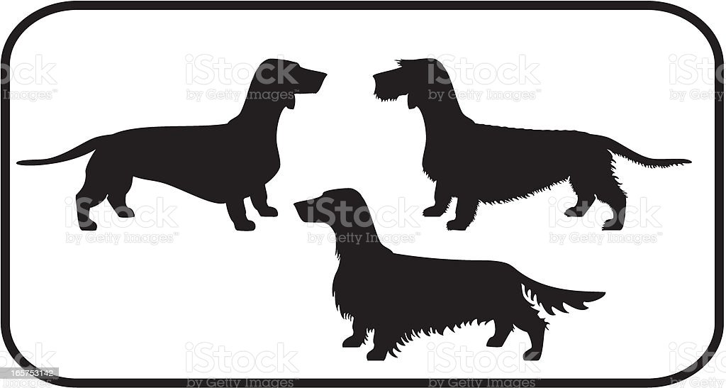 Dachshunds Set The three coat types vector art illustration
