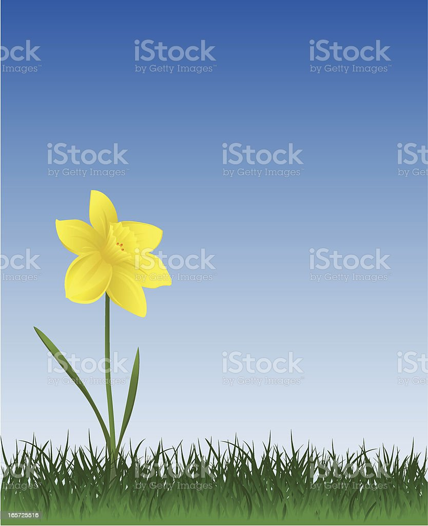Daffodil And Grass vector art illustration