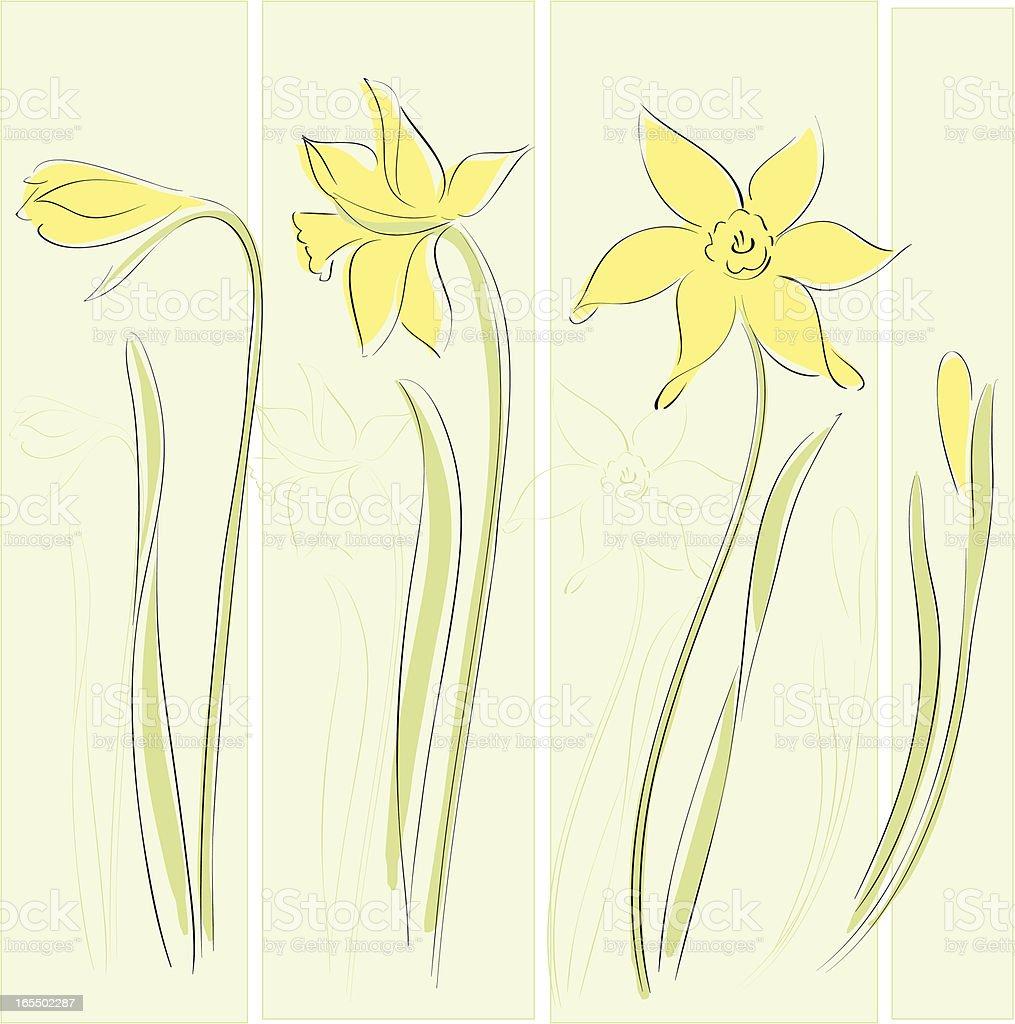 Daffodil vector art illustration