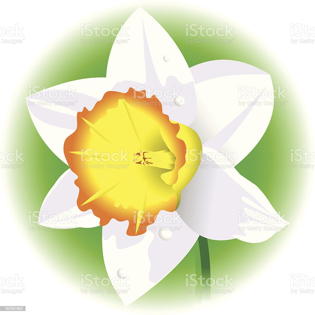 daffodil royalty-free stock vector art