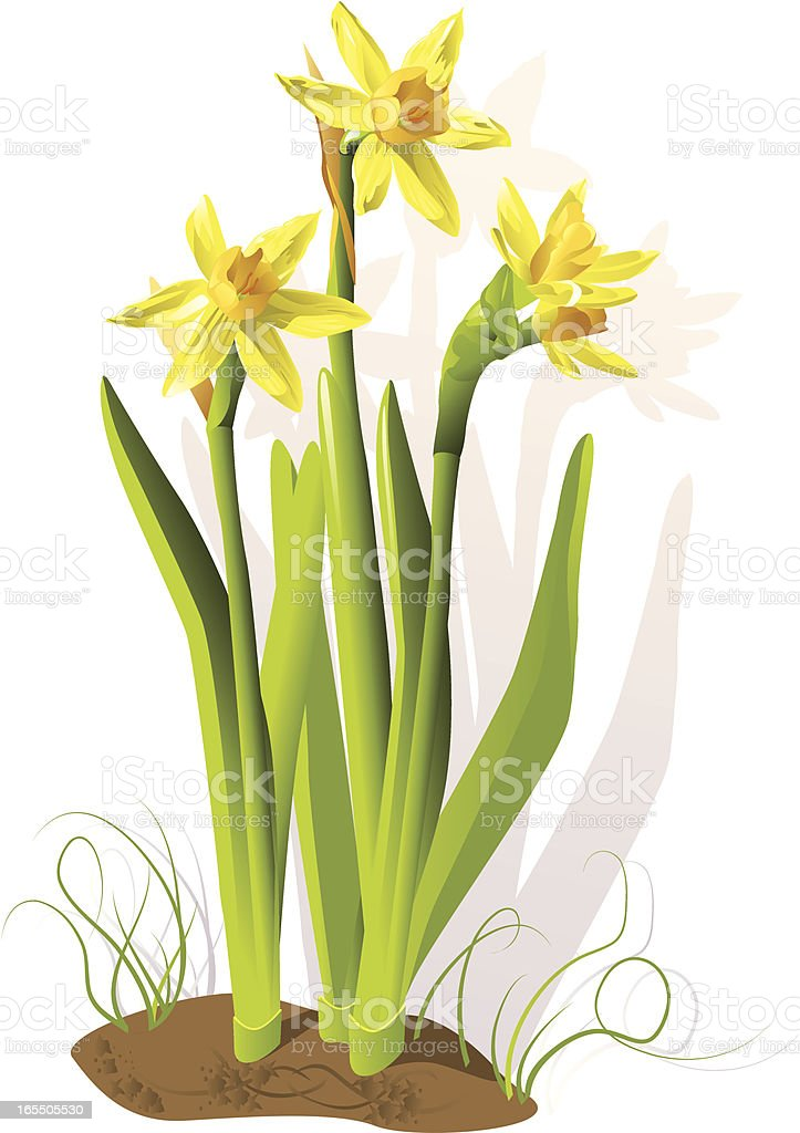 Daffodils and shadows royalty-free stock vector art