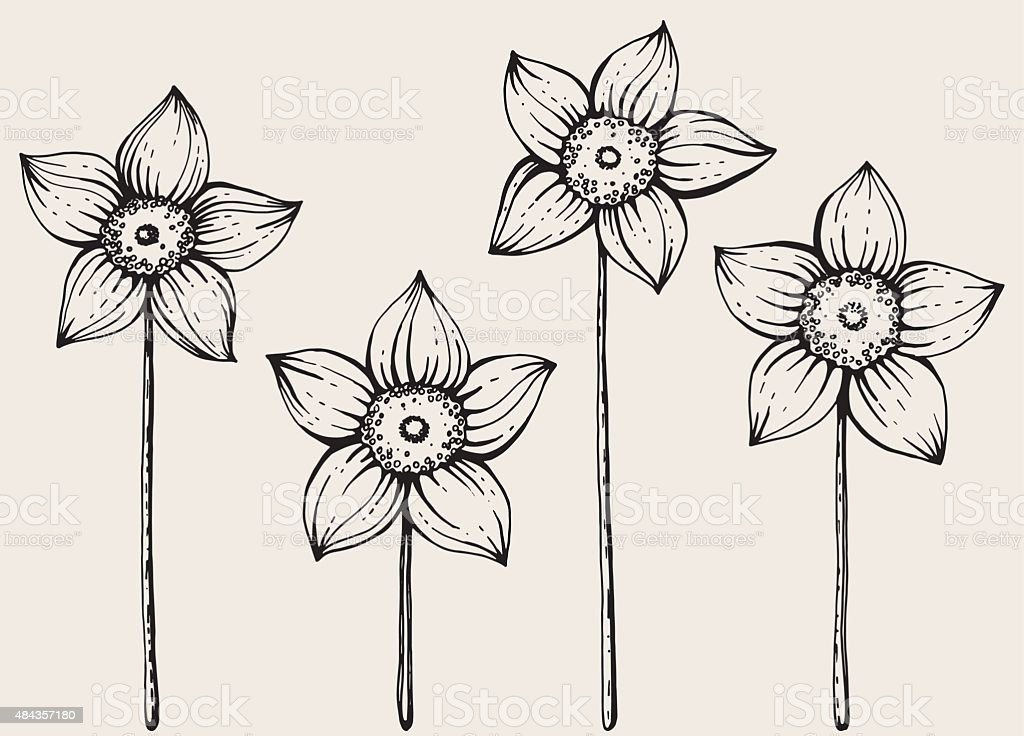 Daffodils. vector art illustration