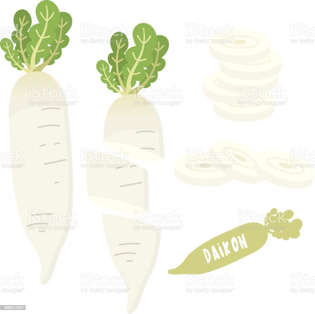 daikon vector art illustration