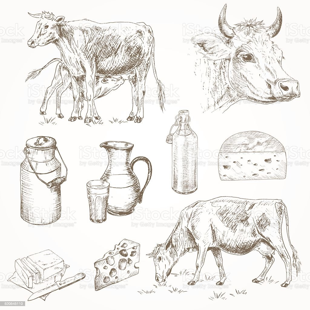 Dairy cattle farm vector art illustration