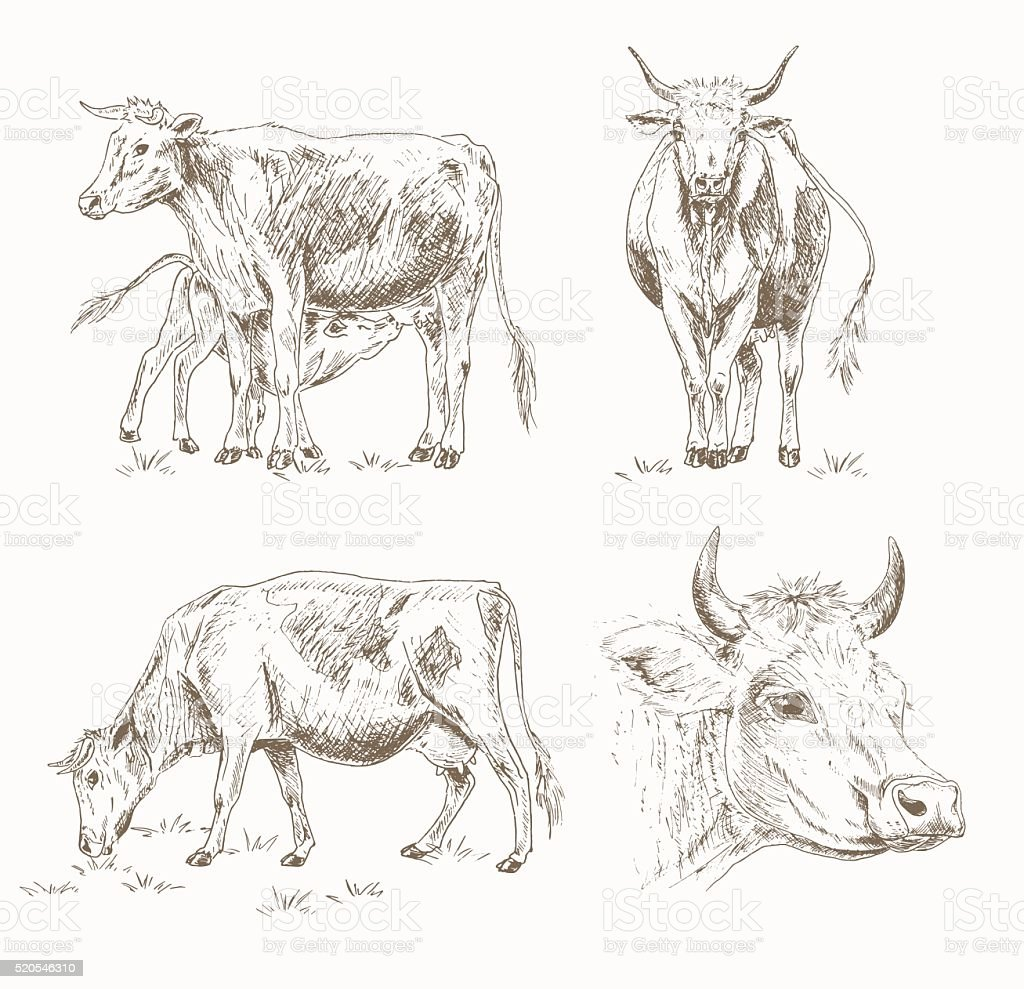 Dairy cattle sketch vector art illustration