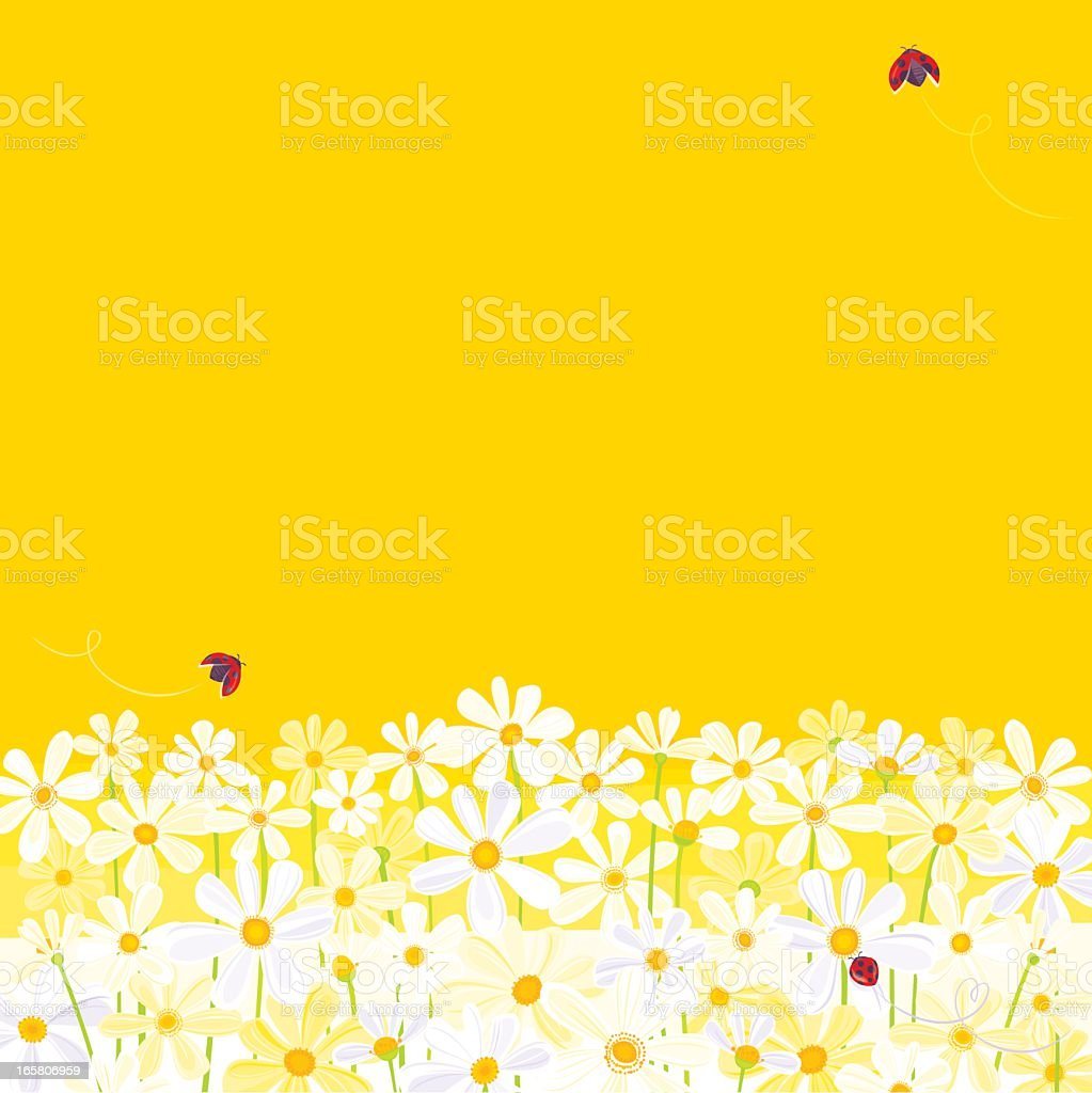Daisies against yellow background with flying ladybugs vector art illustration