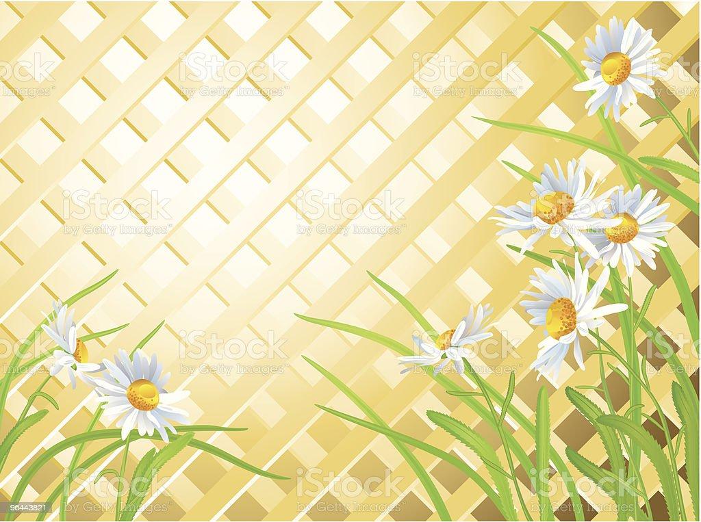 Daisies vector art illustration