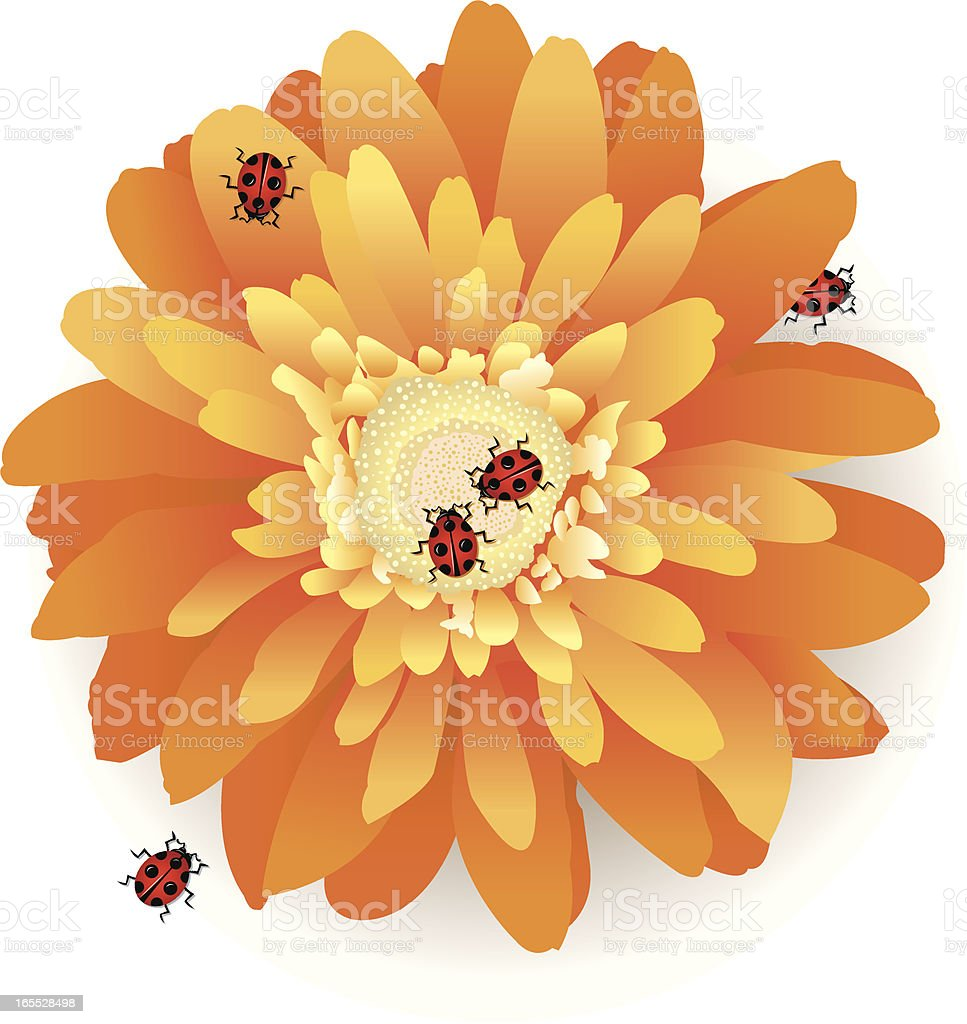 Daisy Flower and Lady Bug Insects for Spring vector art illustration