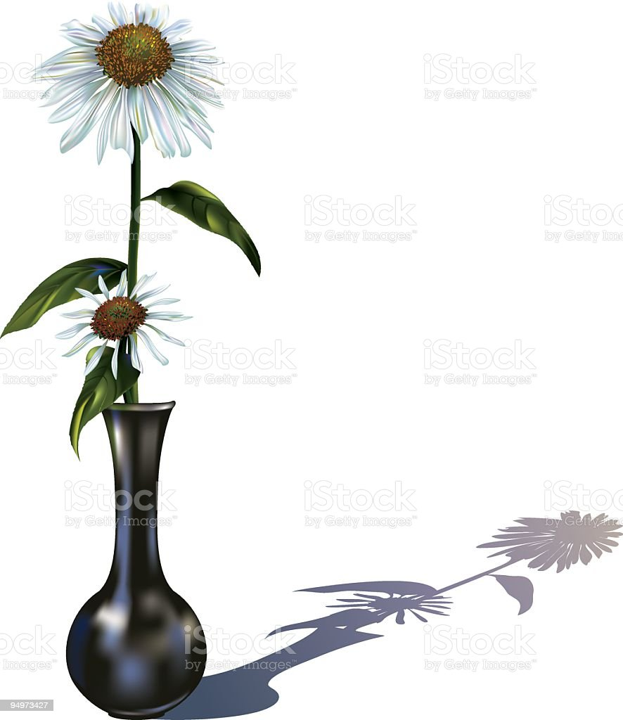 Daisy (Echinacea) in a Black Vase vector art illustration
