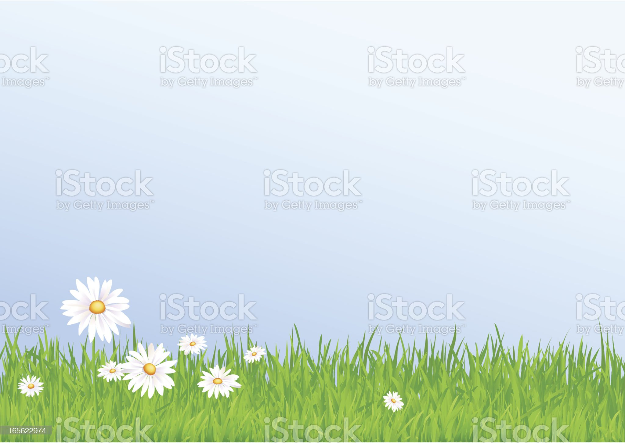 Daisy in the grassland royalty-free stock vector art