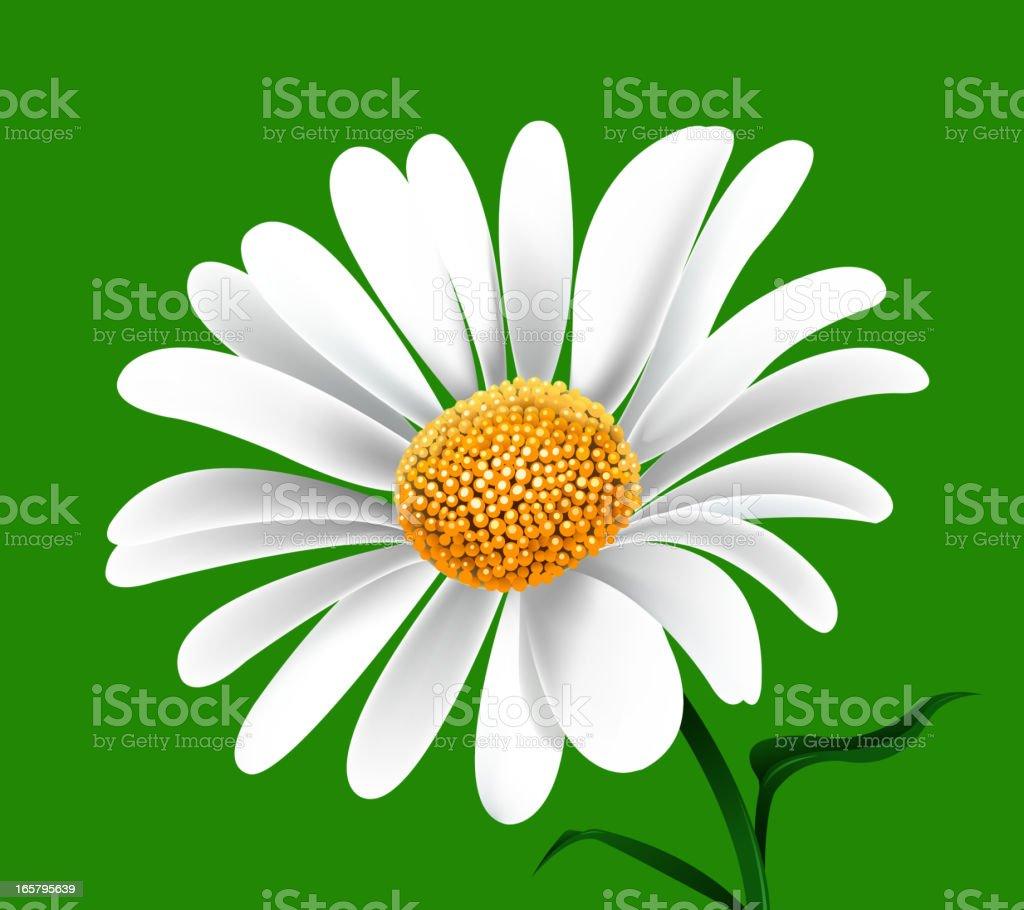 daisy vector art illustration