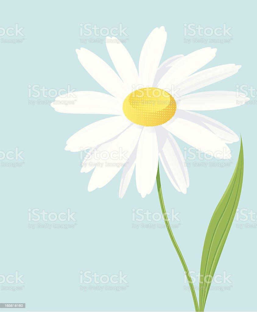 Daisy royalty-free stock vector art