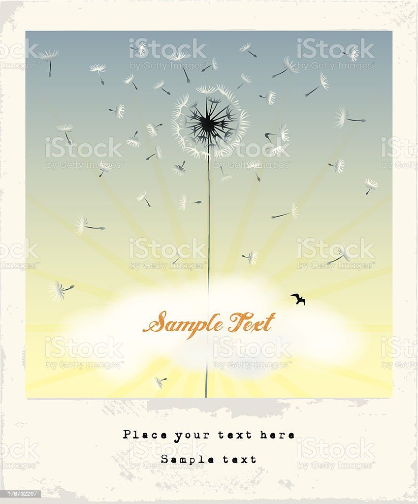 Dandelion flower greeting card/ Invitation. royalty-free stock vector art
