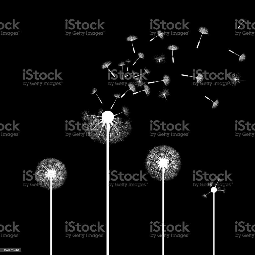 dandelion flowers. vector art illustration
