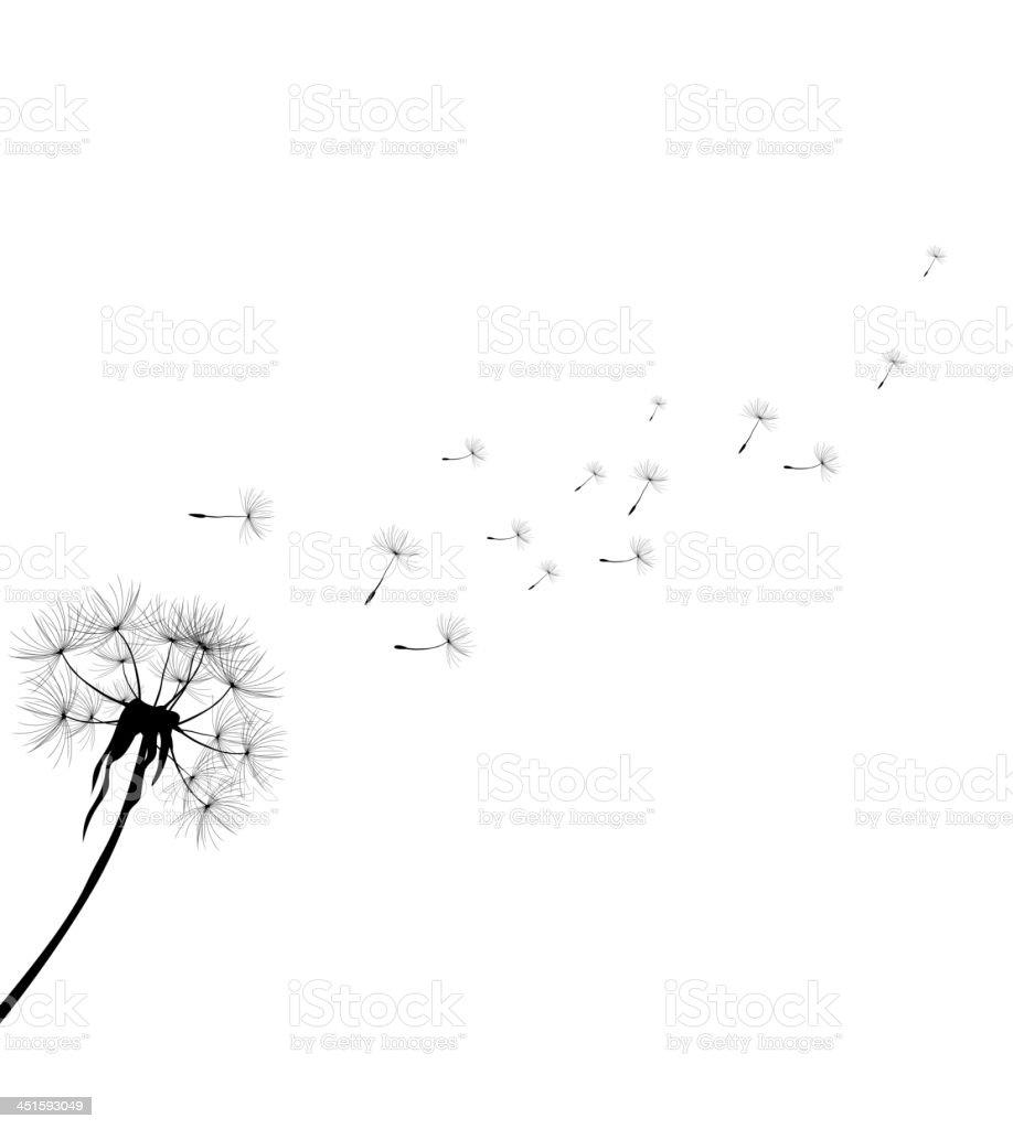 dandelion for you design vector art illustration