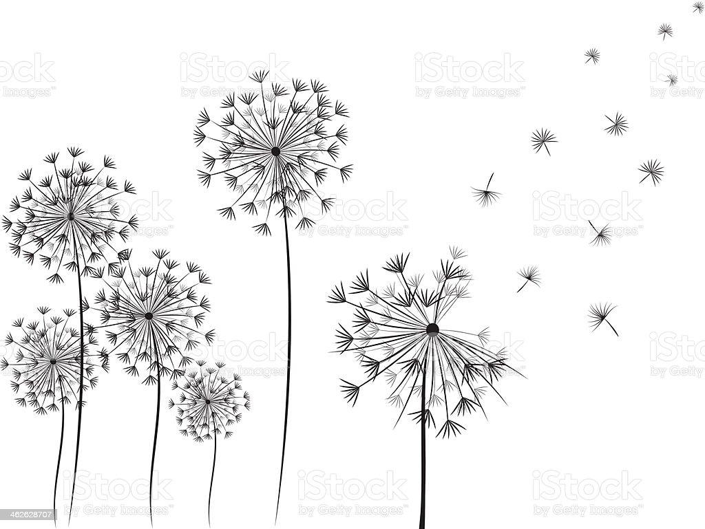 Dandelion handdrawn illustration vector art illustration