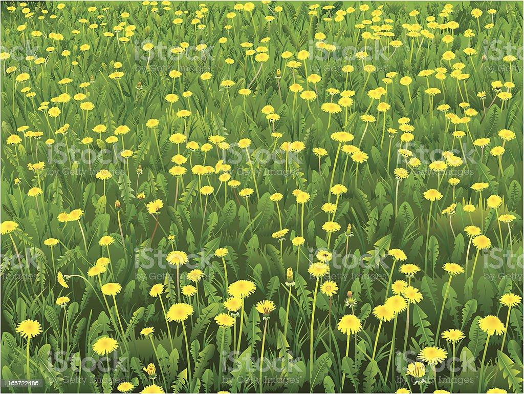 Dandelion meadow vector art illustration