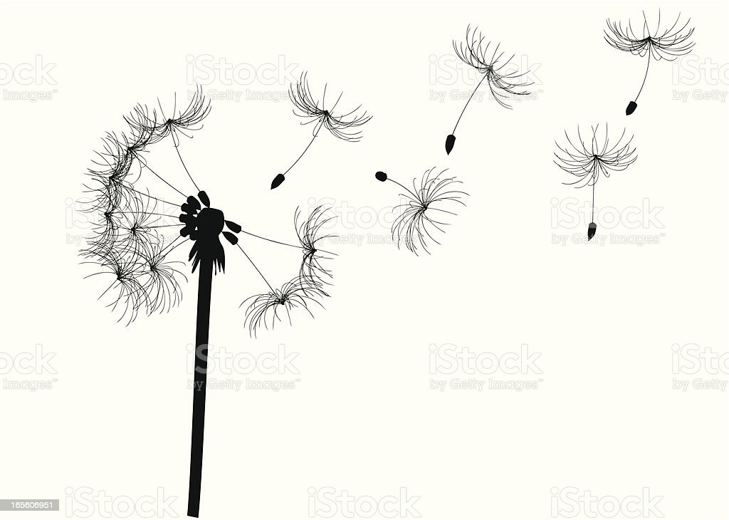dandelion royalty-free stock vector art