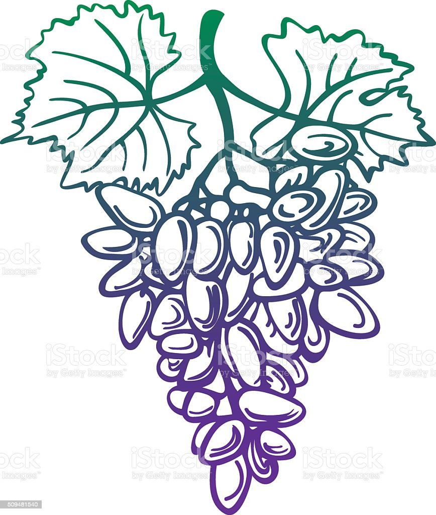 Dark Grapes With Leaves vector art illustration