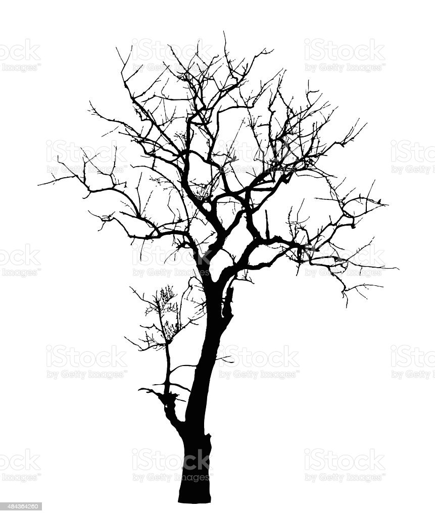 Dead Tree without Leaves : Vector vector art illustration