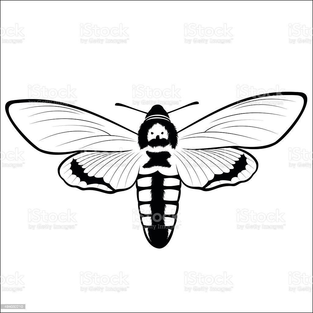 Death s Head Hawkmoth royalty-free stock vector art