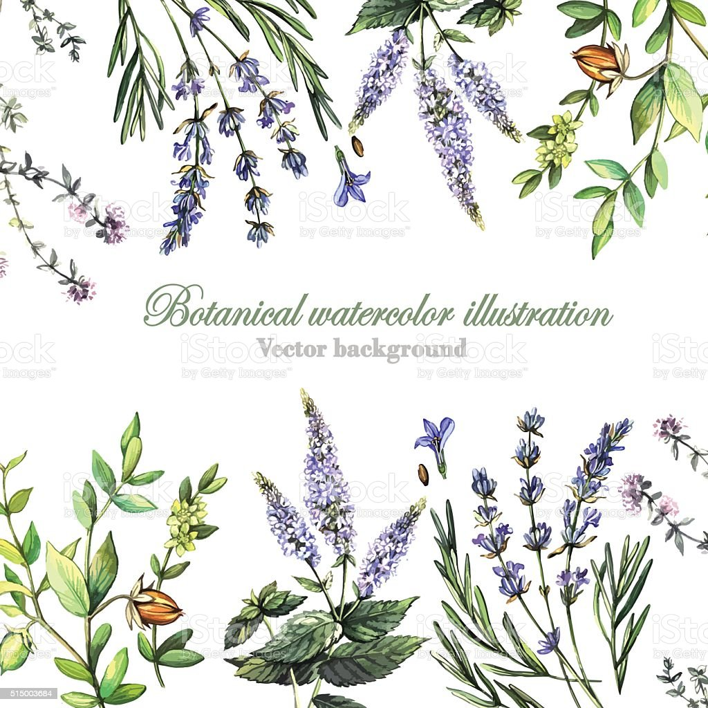 Decorative background with medicinal plants vector art illustration