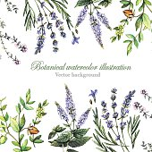 Decorative background with medicinal plants