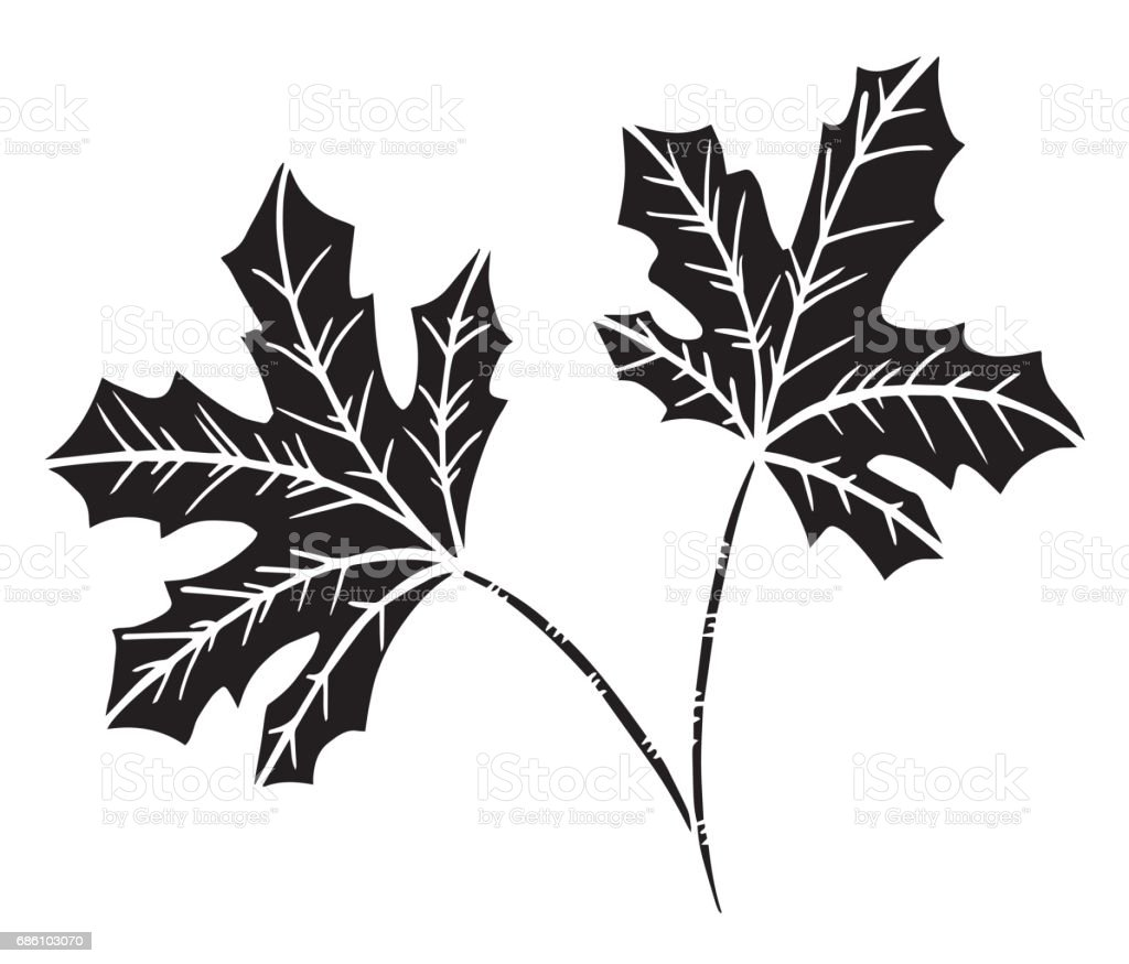Decorative black and white leaf of the tree maple - Illustration Alternative Therapy, Art, Art And Craft, Arts Culture and Entertainment, Autumn vector art illustration