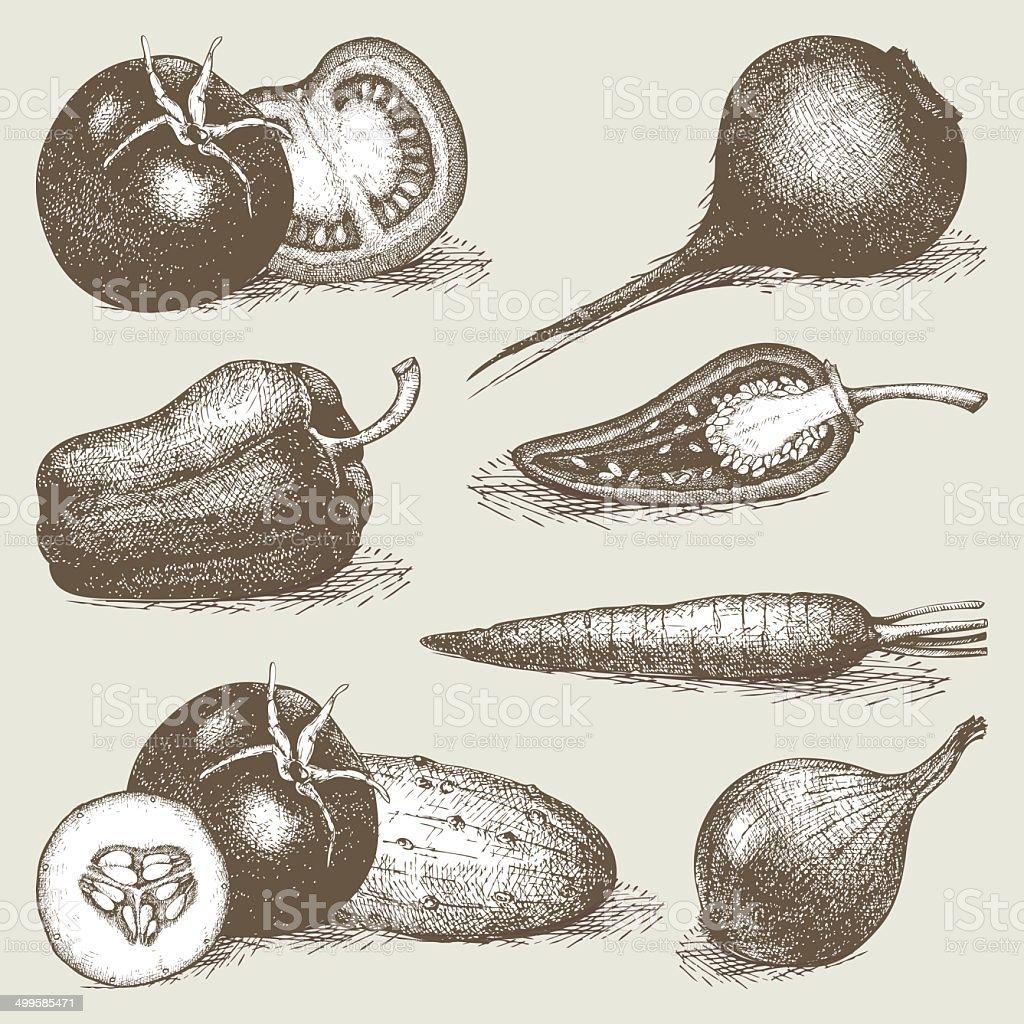 Decorative engraved vegetables vector art illustration