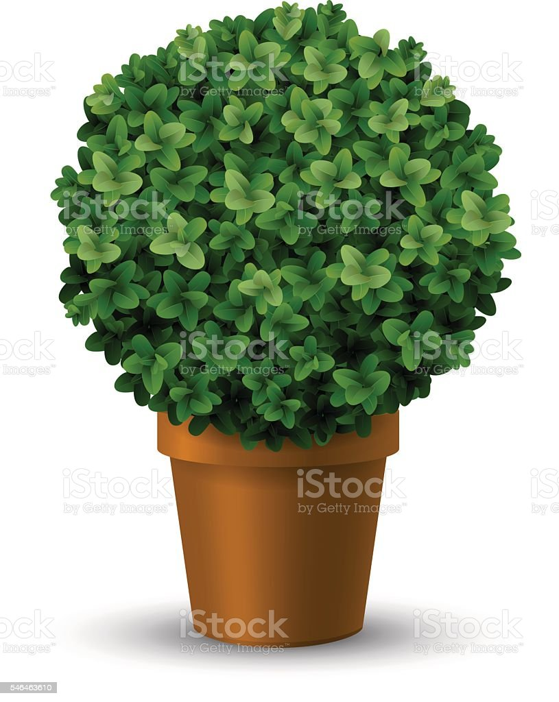 Decorative spherical boxwood in a pot vector art illustration