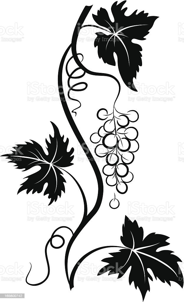 Decorative Stylized Grapevine with Grape bunch and Three Leaves vector art illustration
