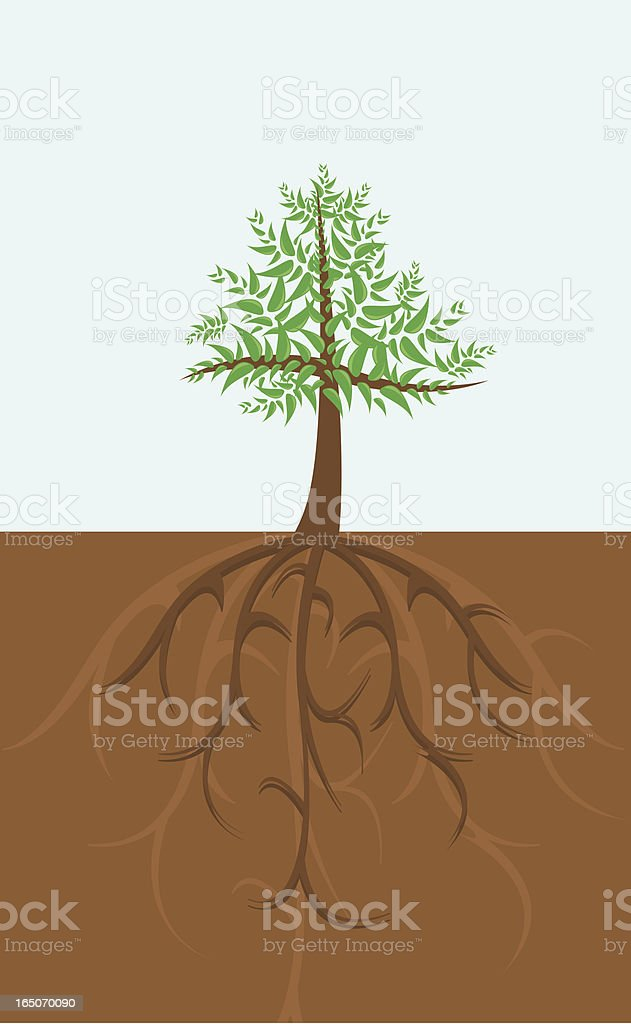 Deep roots and the tree royalty-free stock vector art