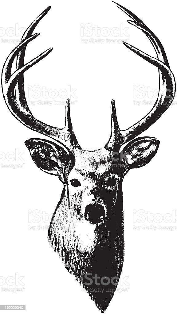 Deer Head (Vector) royalty-free stock vector art