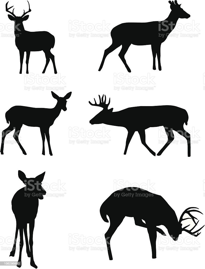 Deer Silhouettes vector art illustration
