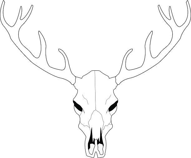 Line Drawing Deer : Deer skull clip art vector images illustrations istock