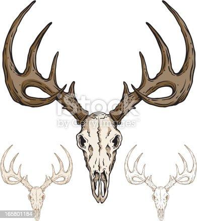 Deer Skull stock vector art 165801184 | iStock