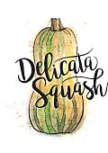 Delicata Squash Painted in Watercolor With Text - Vector Illustration