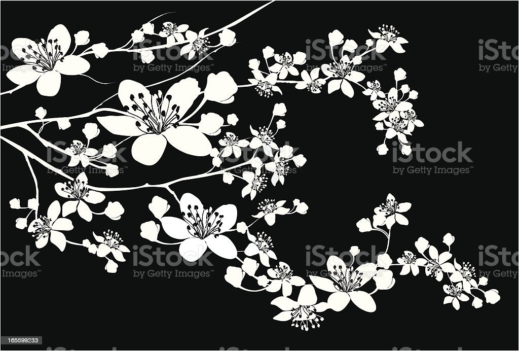 Delicate Silhouette of blooming branch vector art illustration
