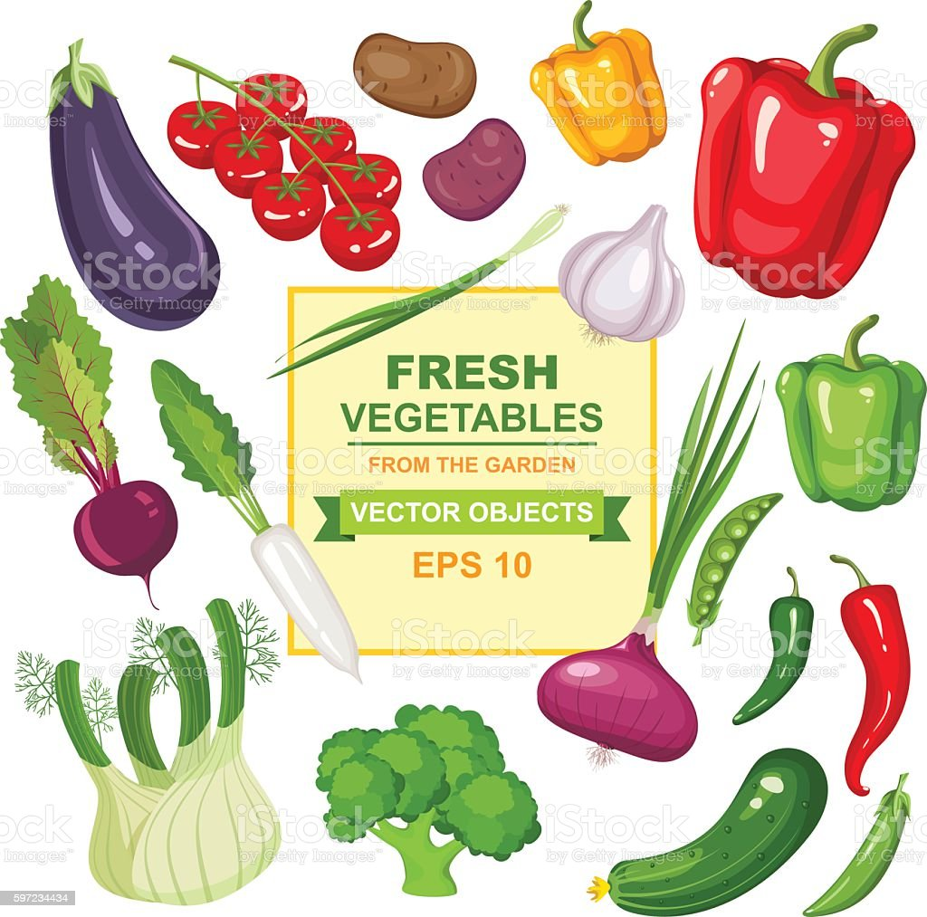 Delicious vegetables from the garden vector art illustration