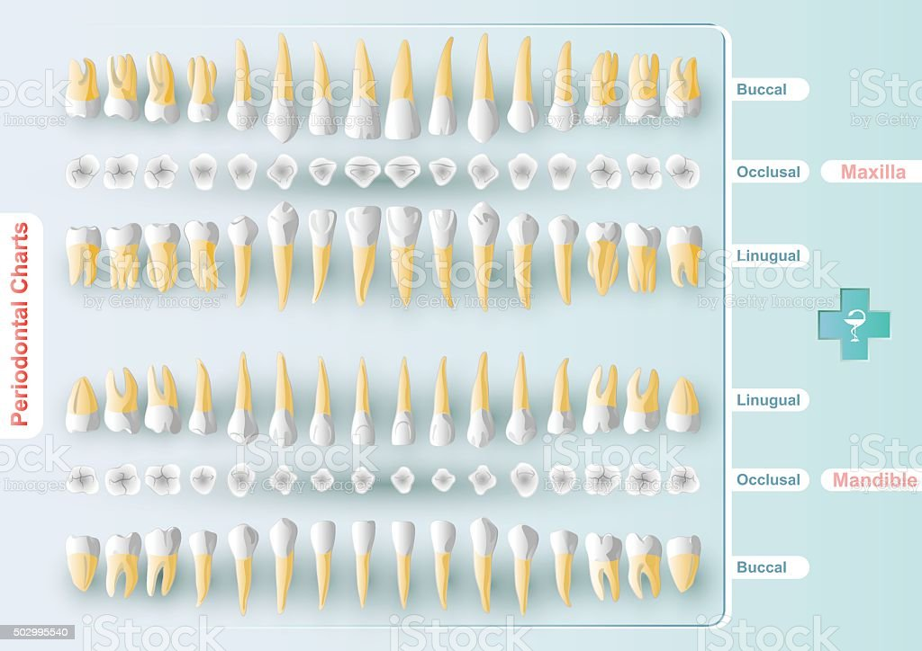 Dental and Periodontal Charting vector art illustration