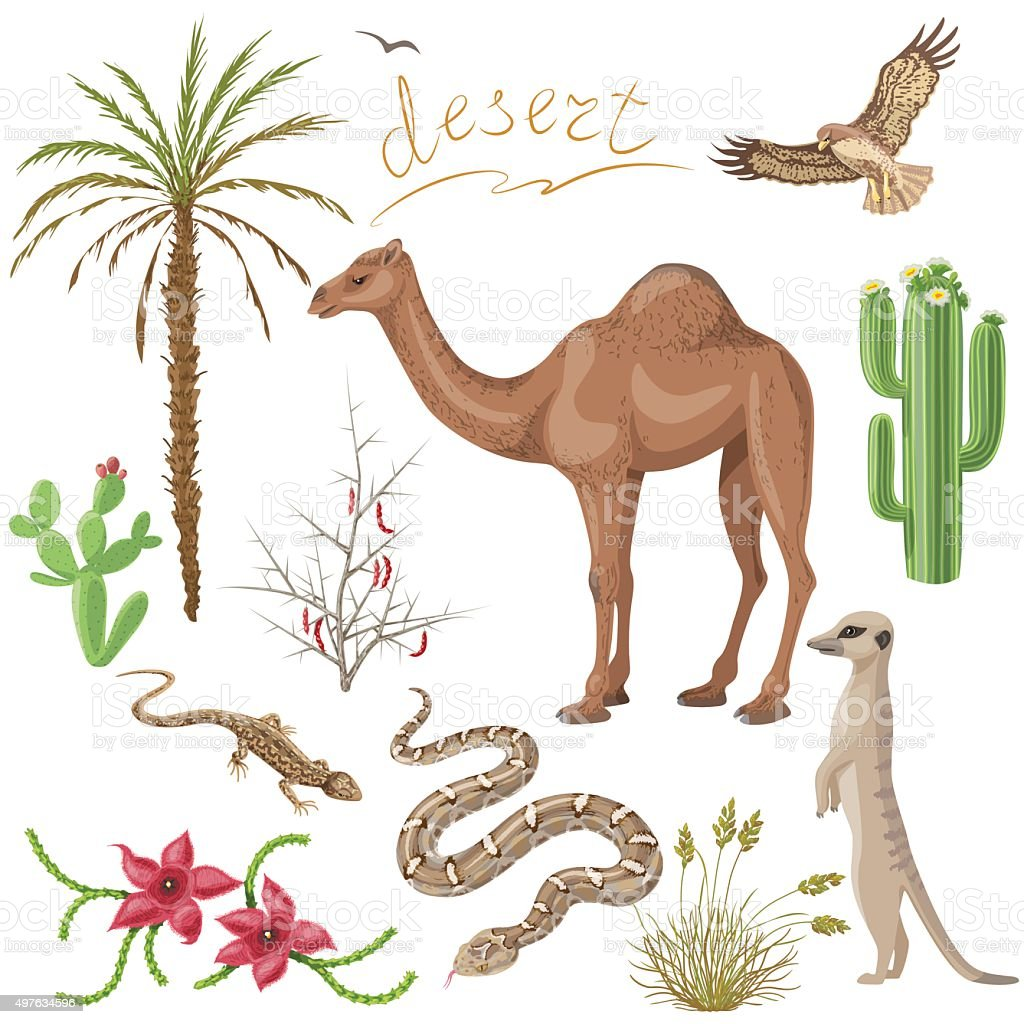 Desert plants and animals set vector art illustration