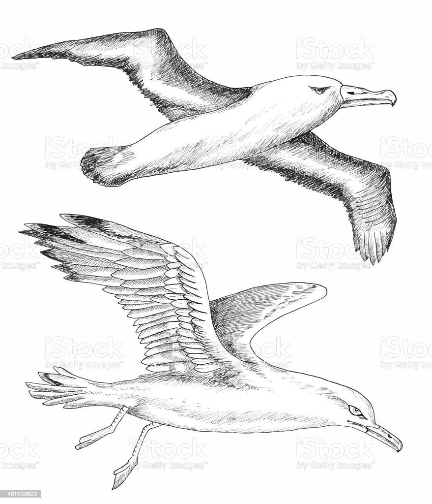 Design set with gulls vector art illustration