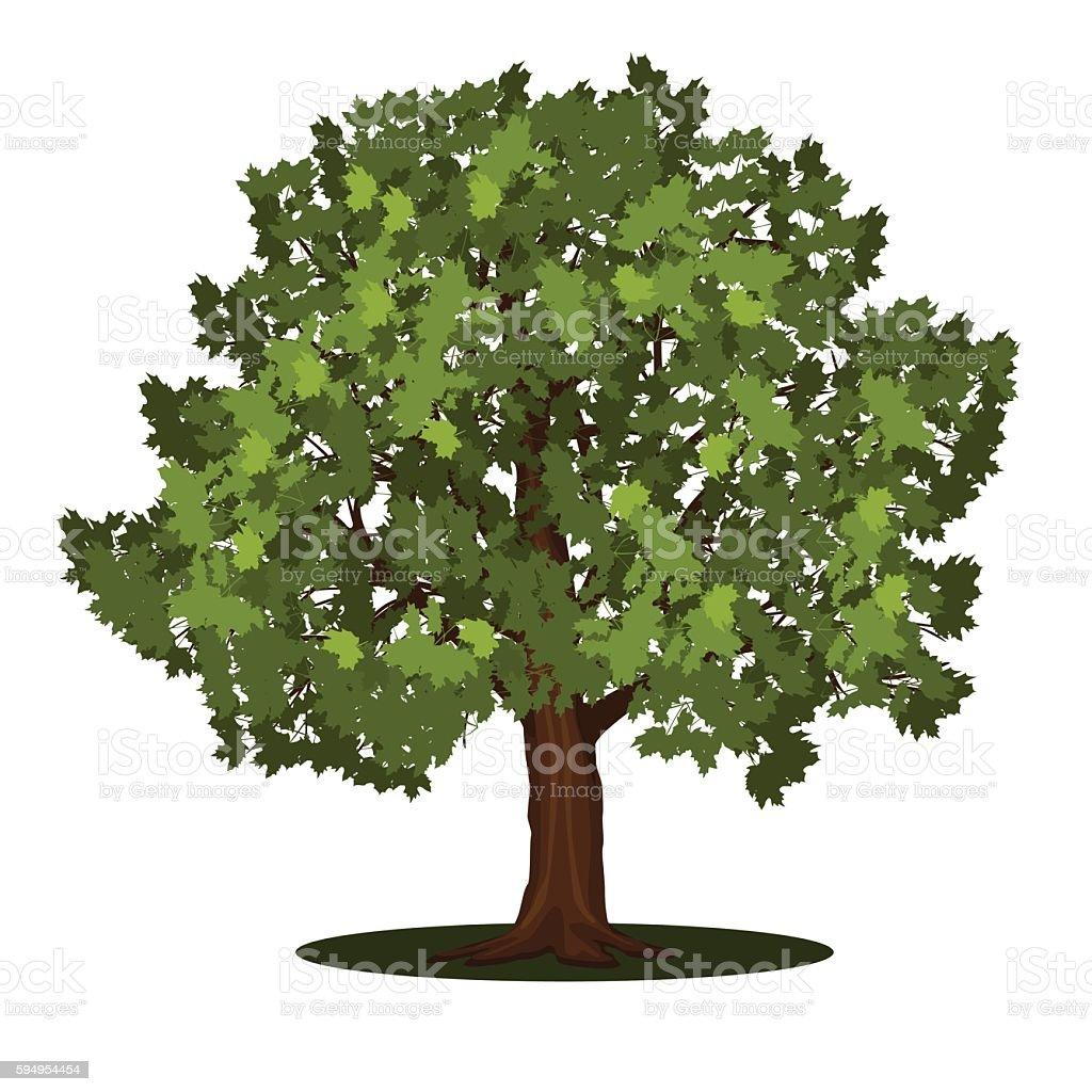 detached tree maple with leaves vector art illustration