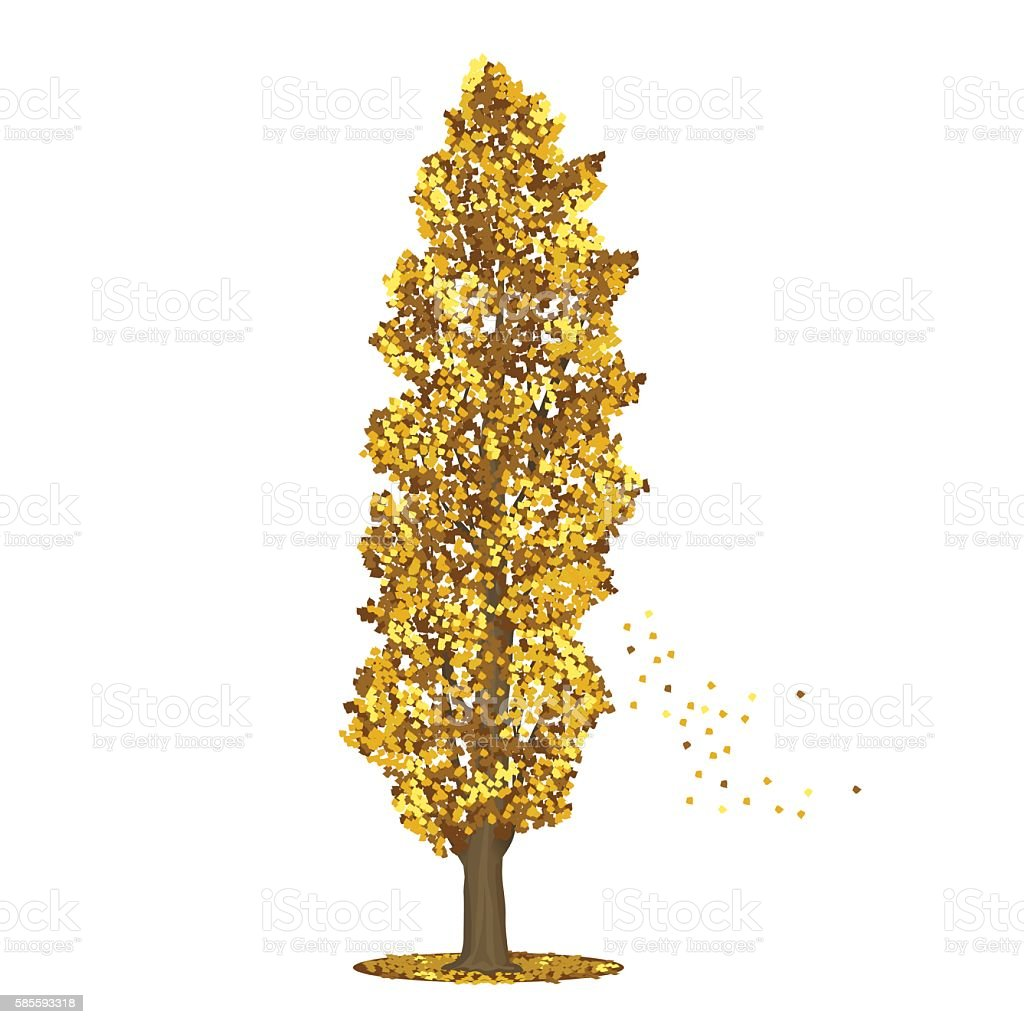 detached tree poplar with yellow leaves vector art illustration