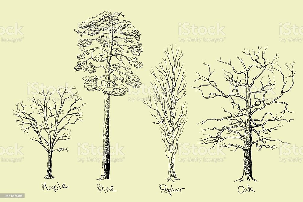 Detail monochrome drawing of four trees vector art illustration