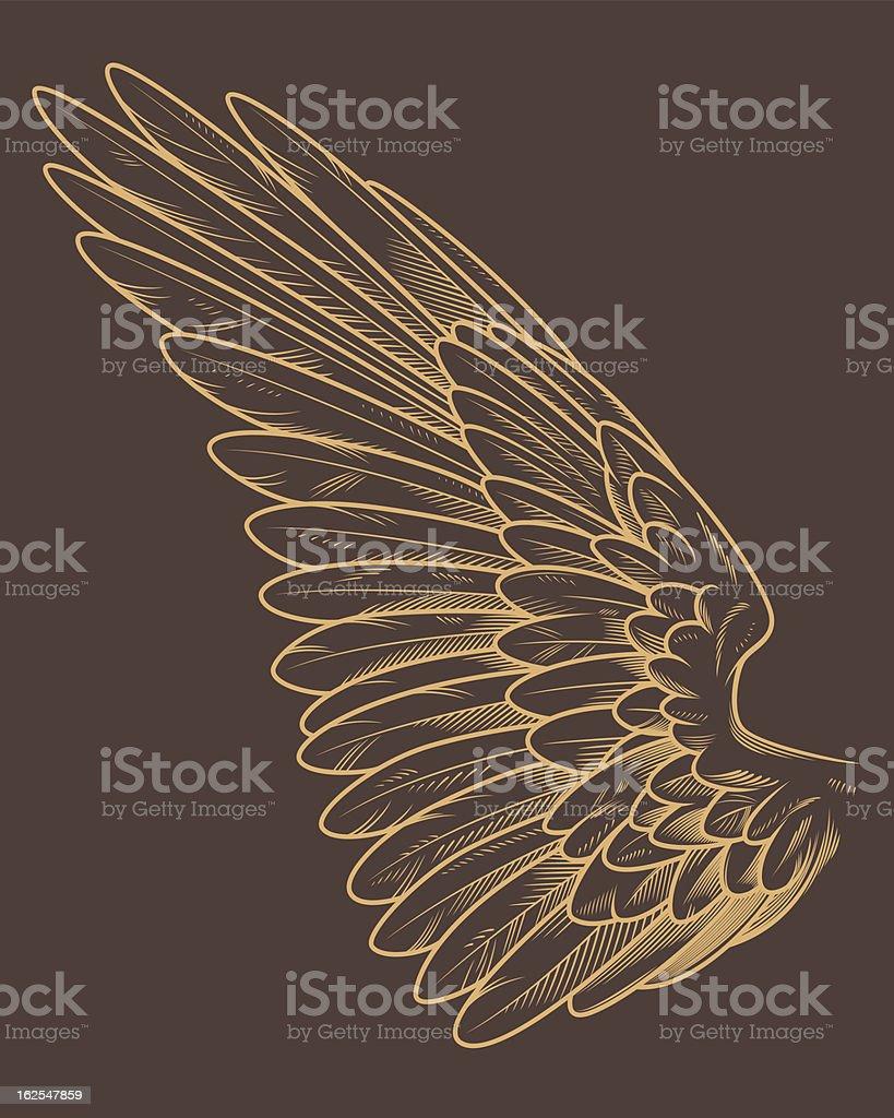 Detailed Bird Wing vector art illustration