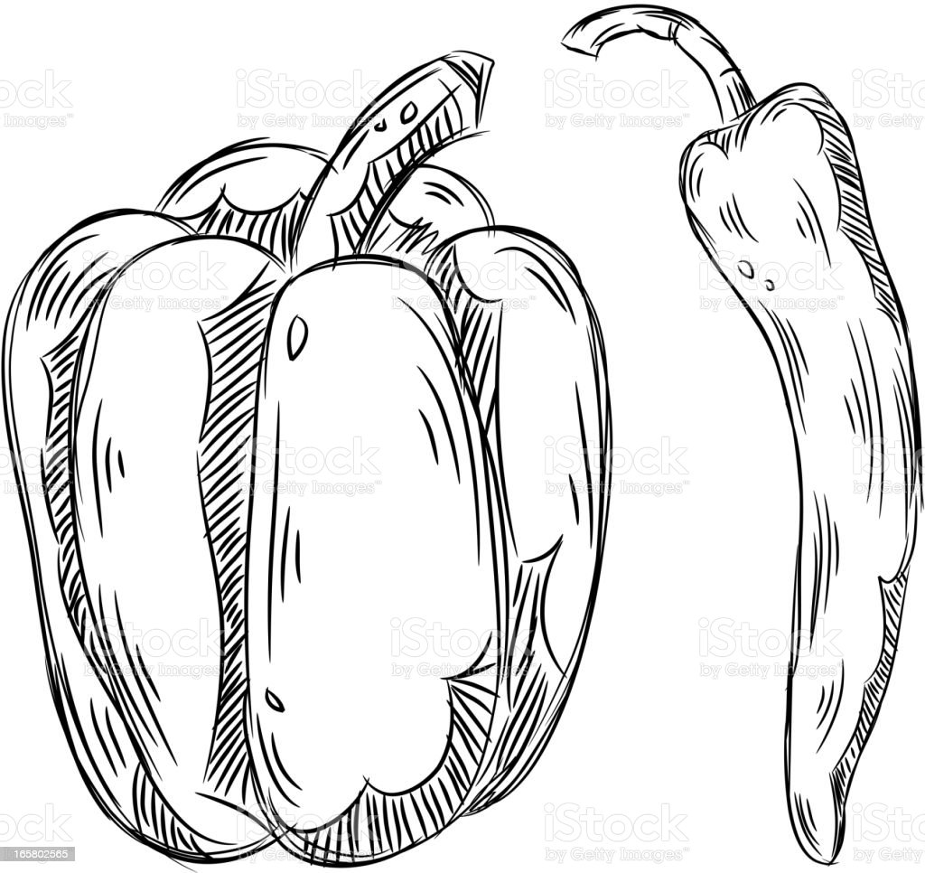 Detailed Drawings of Bell pepper and Chili vector art illustration